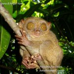Philippine Fun Divers Alona Beach Panglao Bohol Adventure trip Tarsier Sanctuary 1