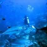 Philippine Fun Divers - Divers Alona Beach Panglao Bohol 10