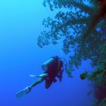 Philippine Fun Divers - Divers Alona Beach Panglao Bohol diver and gorgonian fan
