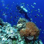 Philippine Fun Divers - Divers Alona Beach Panglao Bohol 9