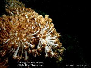 Philippine Fun Divers Alona Beach Panglao Bohol under water creaturesPhilippine Fun Divers Alona Beach Panglao Bohol under water creatures