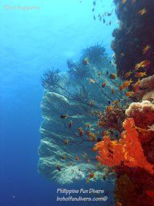 Philippine Fun Divers Alona Beach Panglao Bohol Reef scene 1
