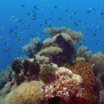 Philippine Fun Divers Alona Beach Panglao Bohol Reef scene 12
