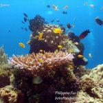 Philippine Fun Divers Alona Beach Panglao Bohol Reef scene 13
