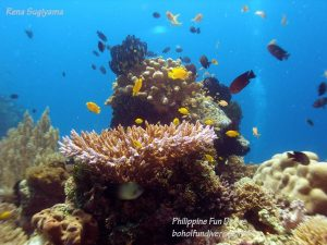 Philippine Fun Divers Alona Beach Panglao Bohol Reef scene 13