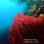 Philippine Fun Divers Alona Beach Panglao Bohol Reef scene 16