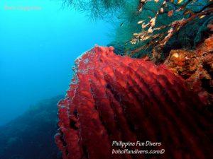 Philippine Fun Divers Alona Beach Panglao Bohol Reef scene 16