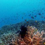 Philippine Fun Divers Alona Beach Panglao Bohol Reef scene 3