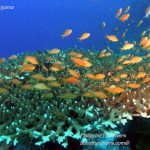 Philippine Fun Divers Alona Beach Panglao Bohol Reef scene 5