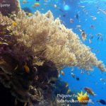 Philippine Fun Divers Alona Beach Panglao Bohol Reef scene 6