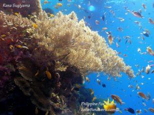 Philippine Fun Divers Alona Beach Panglao Bohol Reef scene 6