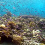 Philippine Fun Divers Alona Beach Panglao Bohol Reef scene 7