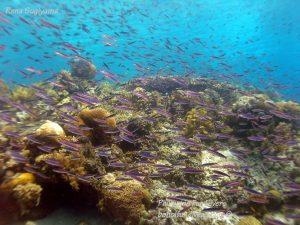 Philippine Fun Divers Alona Beach Panglao Bohol Reef scene 7