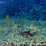 Philippine Fun Divers Alona Beach Panglao Bohol Reef scene 9
