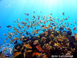 Rena Sugiyama Alona Beach Panglao Bohol under water photo